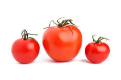 Various sizes of tomatoes on white background Royalty Free Stock Image