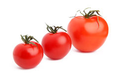 Various sizes of tomatoes on white background Royalty Free Stock Photo
