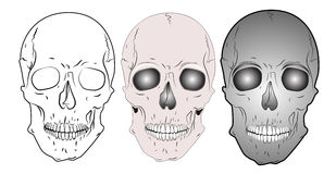 Various skulls Royalty Free Stock Images