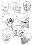 Various skulls Royalty Free Stock Photos