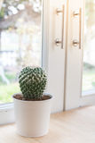 Various of small  cactus Stock Images