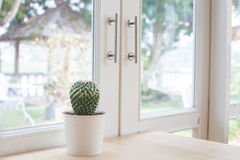 Various of small  cactus Royalty Free Stock Photo
