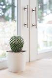 Various of small  cactus Stock Photos