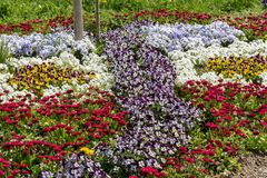 Various small colorful flowers in a flowerbed royalty free stock photo