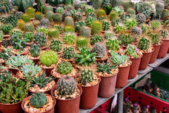 Various of small plant and cactus Stock Photo