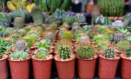 Various of small plant and cactus Royalty Free Stock Photos