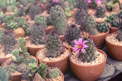 Various of small plant and cactus Stock Photos