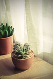 Various of small plant and cactus in a pot Stock Photos