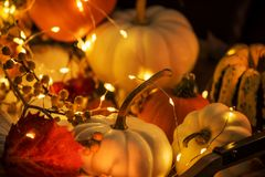 Various small pumpkins, leaves and berries and glowing lights. Halloween celebration. Various small pumpkins, leaves and berries and glowing lights. Dark photo royalty free stock photos