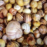 Various snail shells Royalty Free Stock Images