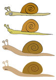 Various Snails Stock Photography