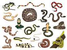Various Snakes Poses Vector Illustration Royalty Free Stock Photography