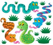 Various snakes theme collection  Stock Photo