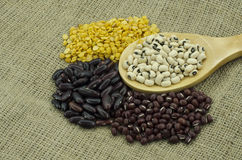 The various sorted dry Legumes Royalty Free Stock Images