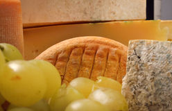 Various sorts of cheese and grapes Royalty Free Stock Image