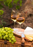 Various sorts of cheese, Two glasses of white wine in the garden. Various sorts of cheese, Two glasses of white wine in the vineyard Royalty Free Stock Images