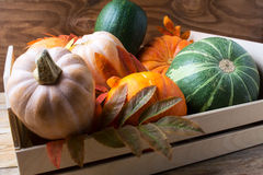 Various sorts of ripe pumpkins in wooden box Stock Photography