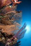 Various species of colorful fan coral and sunball. Stock Photo