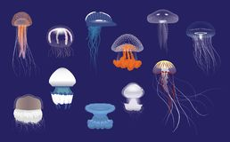 Free Various Species Jellyfish Cartoon Vector Stock Image - 130834721