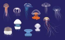 Free Various Species Jellyfish Cartoon Vector Stock Image - 130834721