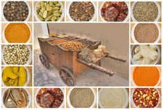 Various spices all over the world Royalty Free Stock Image