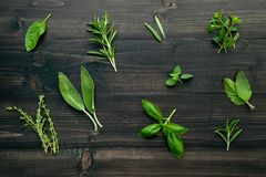 Various of spices and herbs on wooden background. Flat lay spices ingredients rosemary, thyme, oregano, sage leaves and sweet. Basil on dark wooden stock image