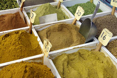 Various spices powder Royalty Free Stock Photos