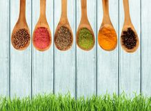Various colorful spices in wooden spoons royalty free stock images