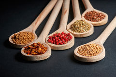 Various of spices in wooden spoons Stock Images