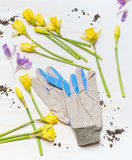Various spring flowers and garden work gloves on white wooden background, top view. Royalty Free Stock Images
