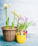 Various spring flowers in pots on  light background Stock Photography