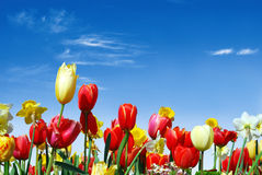 Various spring flowers towards the blue sky stock photography