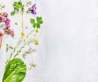 Various of spring or summer flowers and plants on light wooden background, top view stock image
