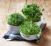 Various sprouts Royalty Free Stock Images
