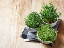 Various sprouts Stock Photography