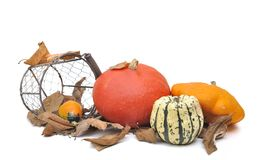 Various squashes Stock Image