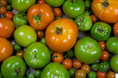 Various Stages of Ripening Tomatoes Stock Photography