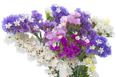 Various Statice flowers Stock Images