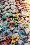 Various Succulent plant in colorful background royalty free stock photography