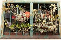 Various succulent plants stock photography