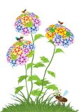 Various summer flowers. Stock Image