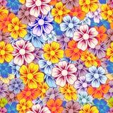 Various summer flowers. Stock Photo