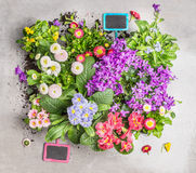 Various summer flowers in pots with garden sign. Preparation of garden bed of flowers in pots. Top view Stock Images