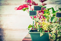 Various summer plants seedling with sign for garden or indoor container gardening. Front view Stock Photography
