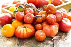 Various tomatoes Stock Photos