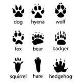 Various traces of wild animals design icon Stock Photos