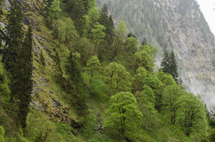 various trees in the mountains Royalty Free Stock Image