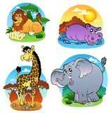 Various tropical animals 1 Stock Photo