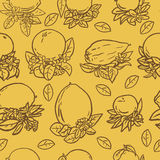 Various tropical citrus fruits Stock Photo
