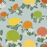 Various tropical citrus fruits Stock Photos